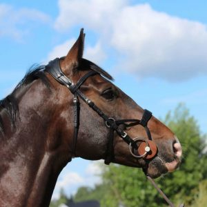 Horse Comfort High Jump Bridle