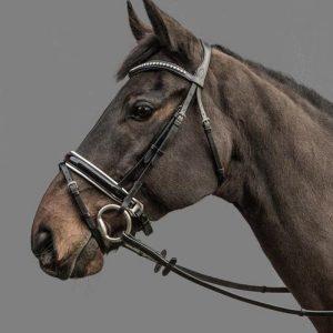 Mountain Horse Gaspari Bridle