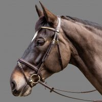 mh_goldwing_bridle